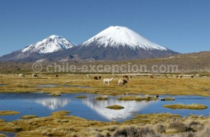 Parc Lauca, nord du Chili