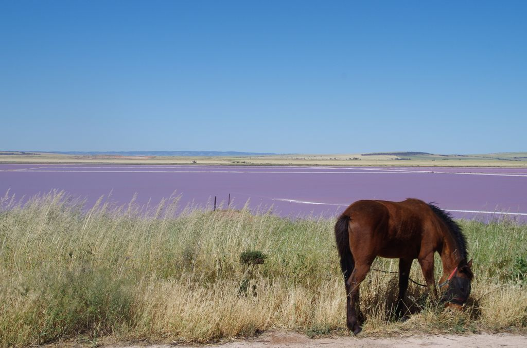 Lac de sel south australia