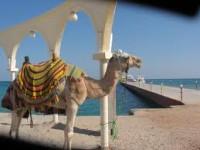 [Article invité] Aux portes de l'Orient en Tunisie