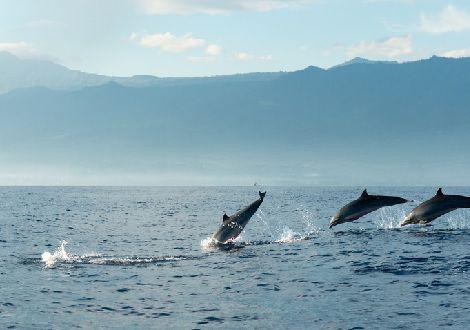 Voir les dauphins sauvages