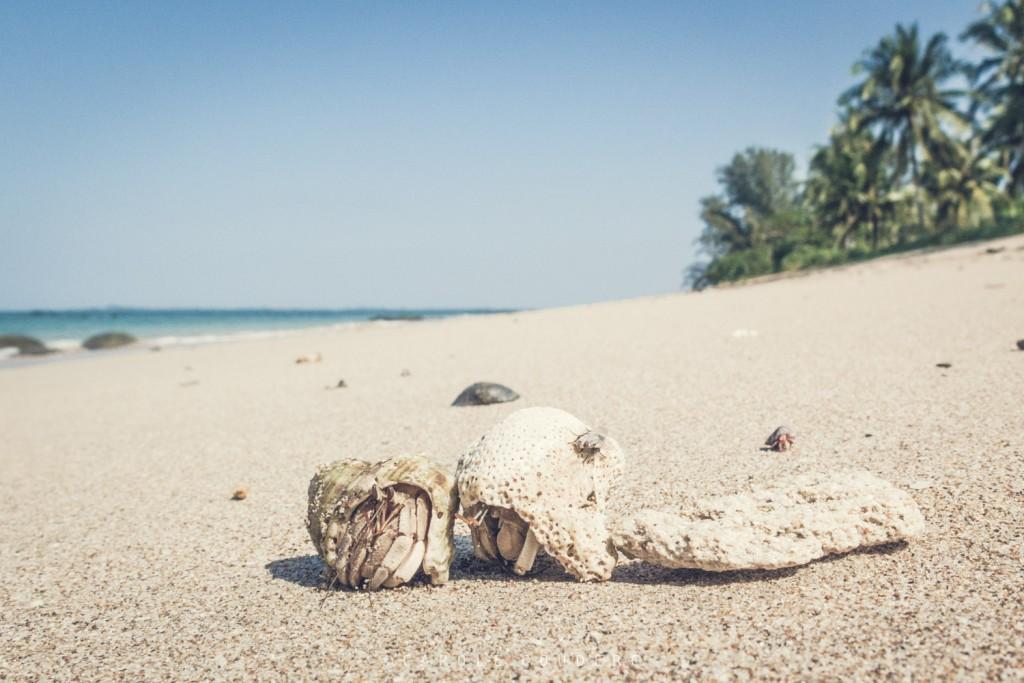 SHAUNGTHA BEACH-67