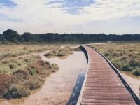 Idées d'activités autour de l'étang de Thau