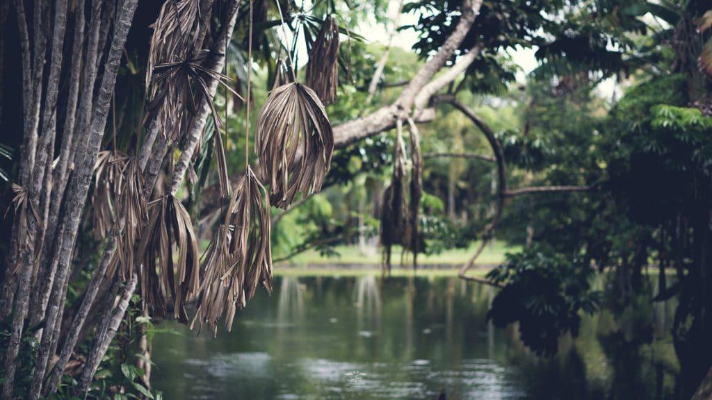 Visiter le jardin botanique pamplemousses pour s for Bal des citrouilles jardin botanique