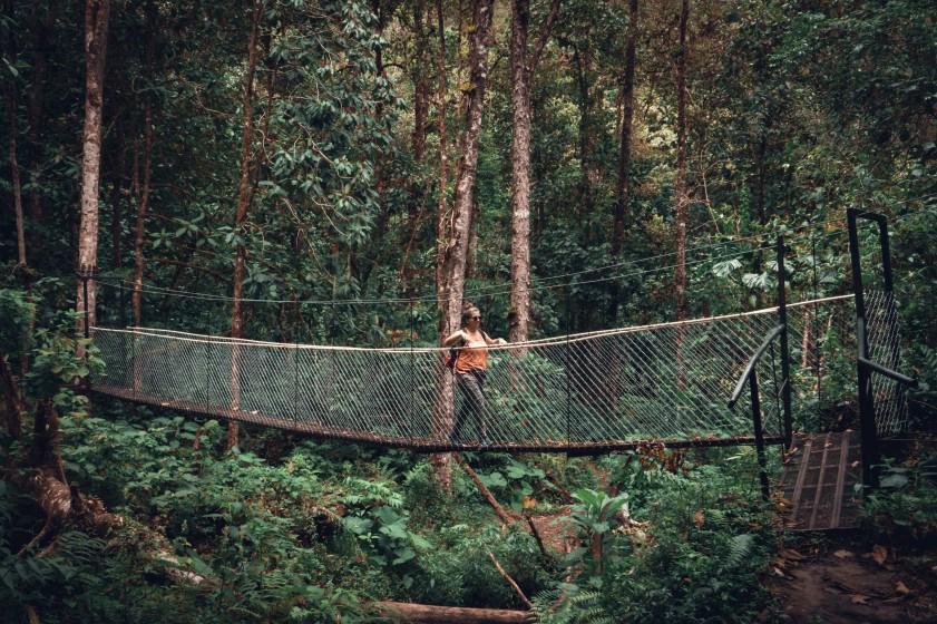 jungle Panama Boquete sony rx 100 vii