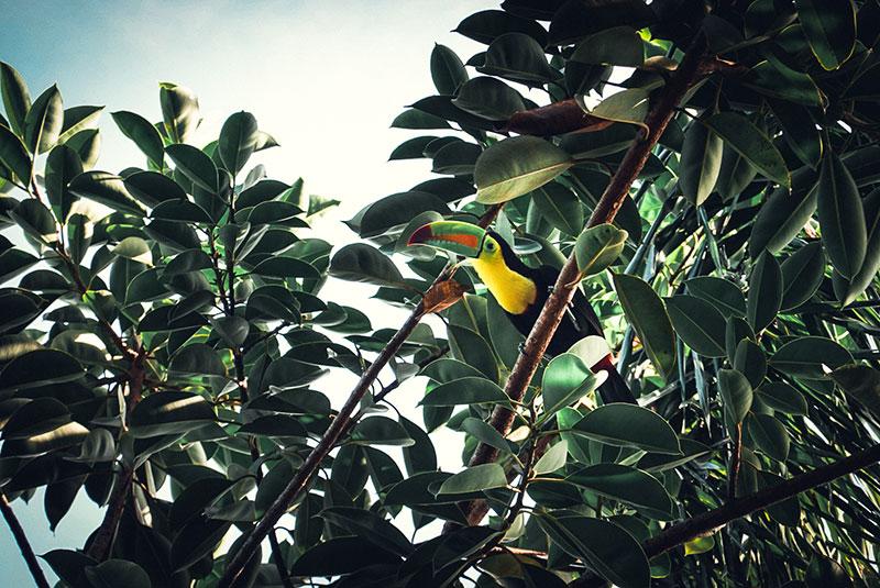 toucan Panama City